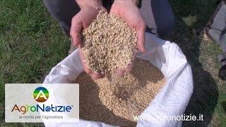 Riso, da EuroChem Agro fertilizzanti innovativi