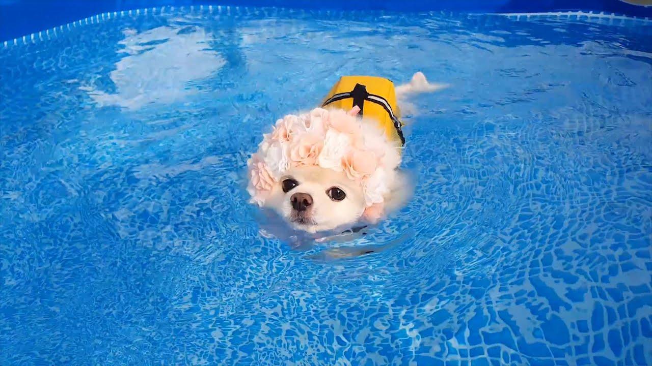 수영이 강아지 다이어트 슬개골 탈구에 좋은 이유