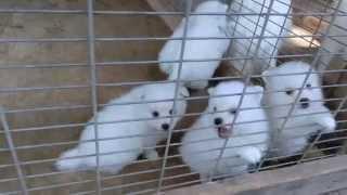 撮影日2014年9月23日 アライ畜犬牧場 www.araichikuken.com.