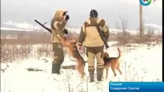 Охота на волков и шакалов в Осетии(, 2017-01-02T21:32:49.000Z)