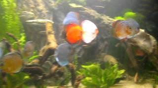 океанариум в Воронеже в ТРК Сити Парк Град(, 2012-01-17T18:36:59.000Z)