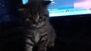 �������� ���� Шок ! С Aliexpres можно заказать котёнка ! Обзор посылки . ������