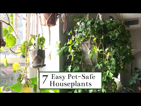 7 Easy Pet-Safe Houseplants