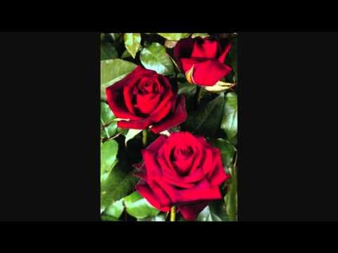 JOSEF METTERNICH  singt  ' Dunkelrote Rosen '