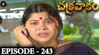 Episode 243    Chakravakam Telugu Daily Serial