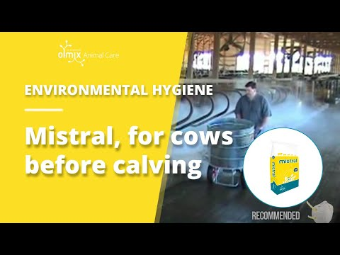 Mistral, litter conditioner for cows before calving – semi-automatic dispenser