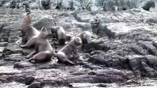 Film 3 de 5 Argentine 2011 / Ushuaia et terre de feu.VOB