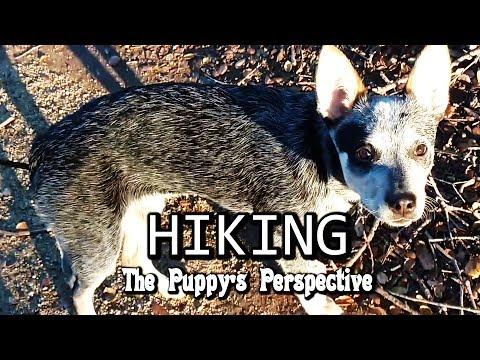 Hiking - Puppy Perspective