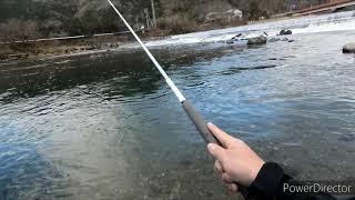 アマゴ300尾釣れるかな!? 2020年2月1日 根尾川  渓流解禁&ステーキ食べ放題& 川魚の捌き方