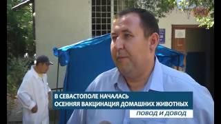 ПОВОД И ДОВОД. В Севастополе началась осенняя вакцинация домашних животных