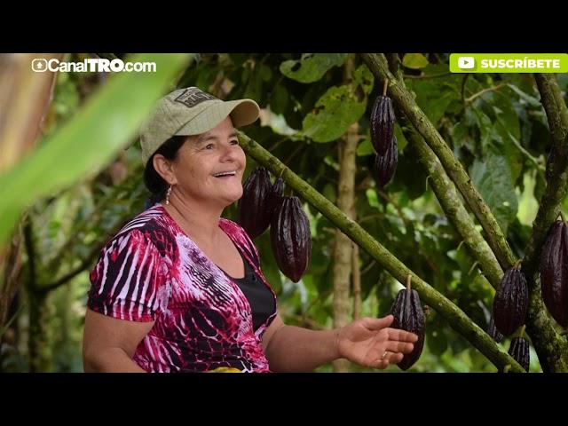 Catatumbo capítulo 6 - Tierras fértiles