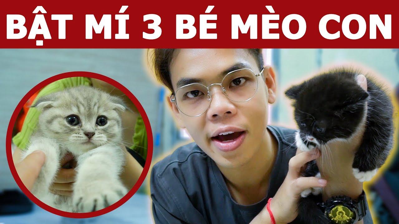 Bật mí 3 bé mèo con của ba Moon và mẹ Bụng Bự | Oops Banana V10g 183