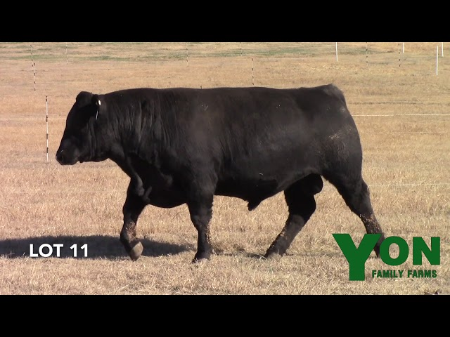 Yon Family Farms Lot 11