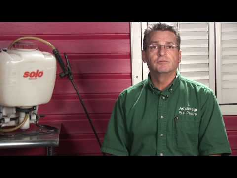 Pest Control : How To Get Rid Of Bedbugs In A Car