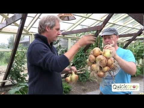 Grow Your Own Onions With Quickcrop