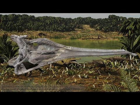 Phytosaur Skull UMNH.VP.24304
