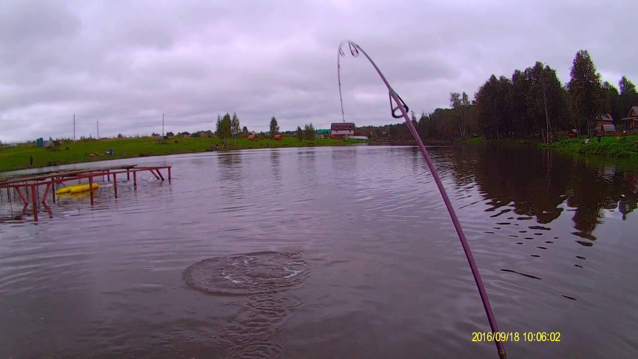 Платная рыбалка в селятино пионерский пруд отзывы