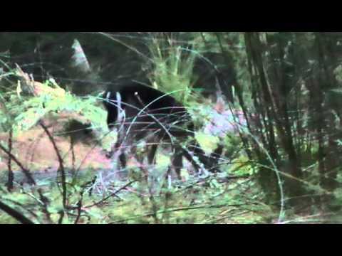 Woodhill Fallow