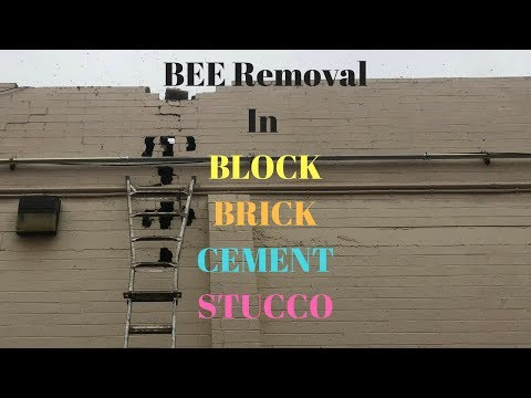 Bee Removal from Block, Brick, Cement Walls