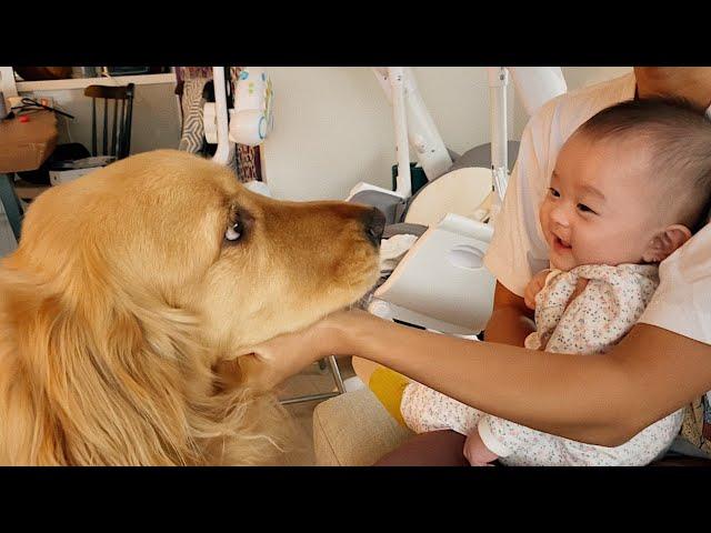 강아지를 쳐다만 봐도 웃음이 나는 아기