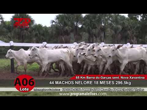 LOTE A06