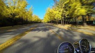과천 은행나무길 오토바이 라이딩