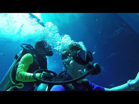 Plongée à Dubaï Atlantis The Palm 4K