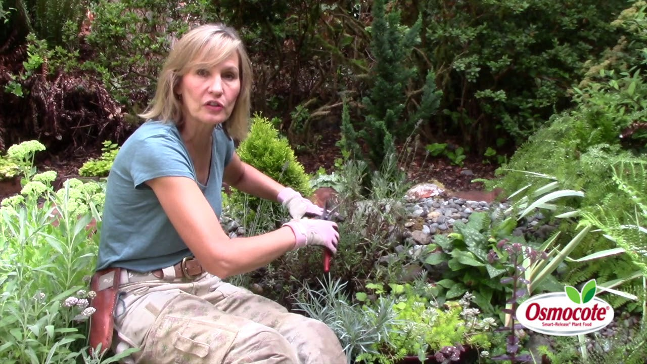 The Secret To Pruning Lavender Youtube