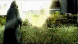 S.T.A.L.K.E.R. песня про чистое небо клип.
