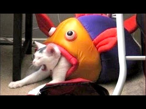 TO LAUGH or NOT TO LAUGH is NO QUESTION HERE, YOU WILL LAUGH! - Funny ANIMAL compilation