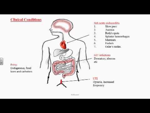 Enterococcus or Group D Streptococci