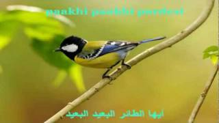 Aye Ajnabi (Indian/Arab lyrics) | Dil Se| JojoSaid أغاني هندية مترجمة