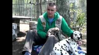 Собака далматин усыновила волчонка