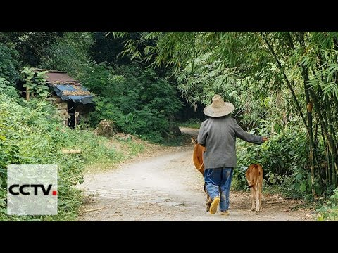 China Insight 04/30/2016 A taste of life in China's rural ar