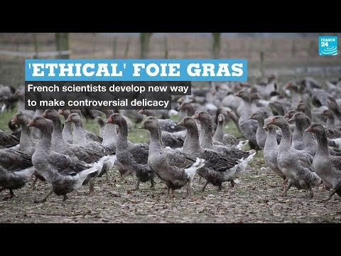 'Ethical' foie gras: French scientists develop new way to make controversial delicacy