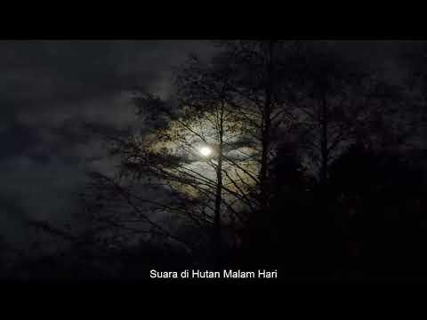 Suara Hutan Malam  Hari YouTube