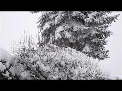 Schneefall - Entspannung - Natur
