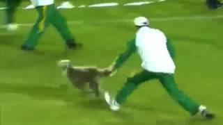 Собака на футбольном поле