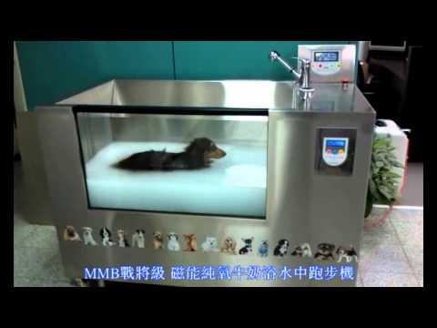 【跑步機·跑步】寵物水中跑步機 – TouPeenSeen部落格