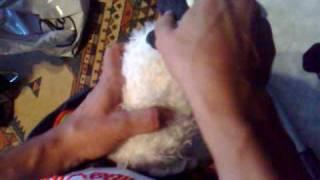 Crazi anal sheep POV