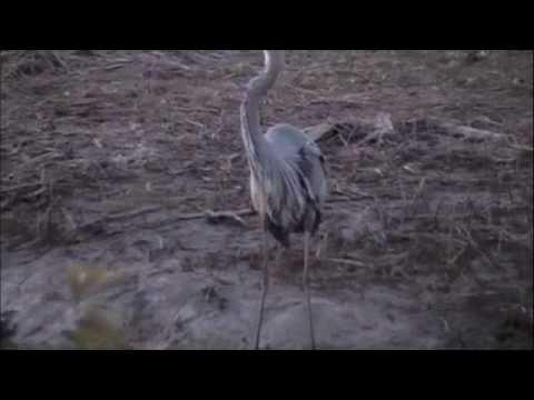 Blackwater National Wildlife Refuge - Cambridge, MD