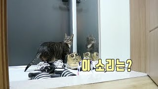 딴짓하는 고양이 한 방에 부르는 소리