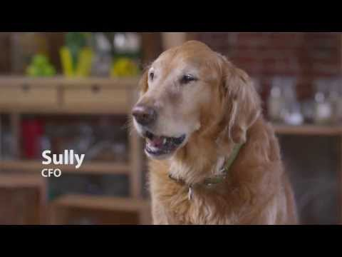 Honest Kitchen -- Talking Dogs Confess Their Opinion of Kibble Dog Food