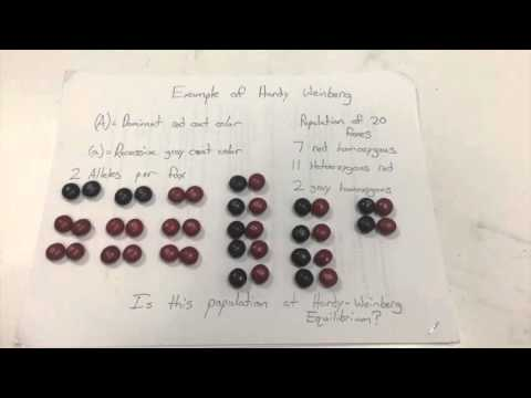 How to Use Hardy-Weinberg to Solve Pedigree Problems