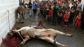 গরু কুরবাণী/Cutting a cow