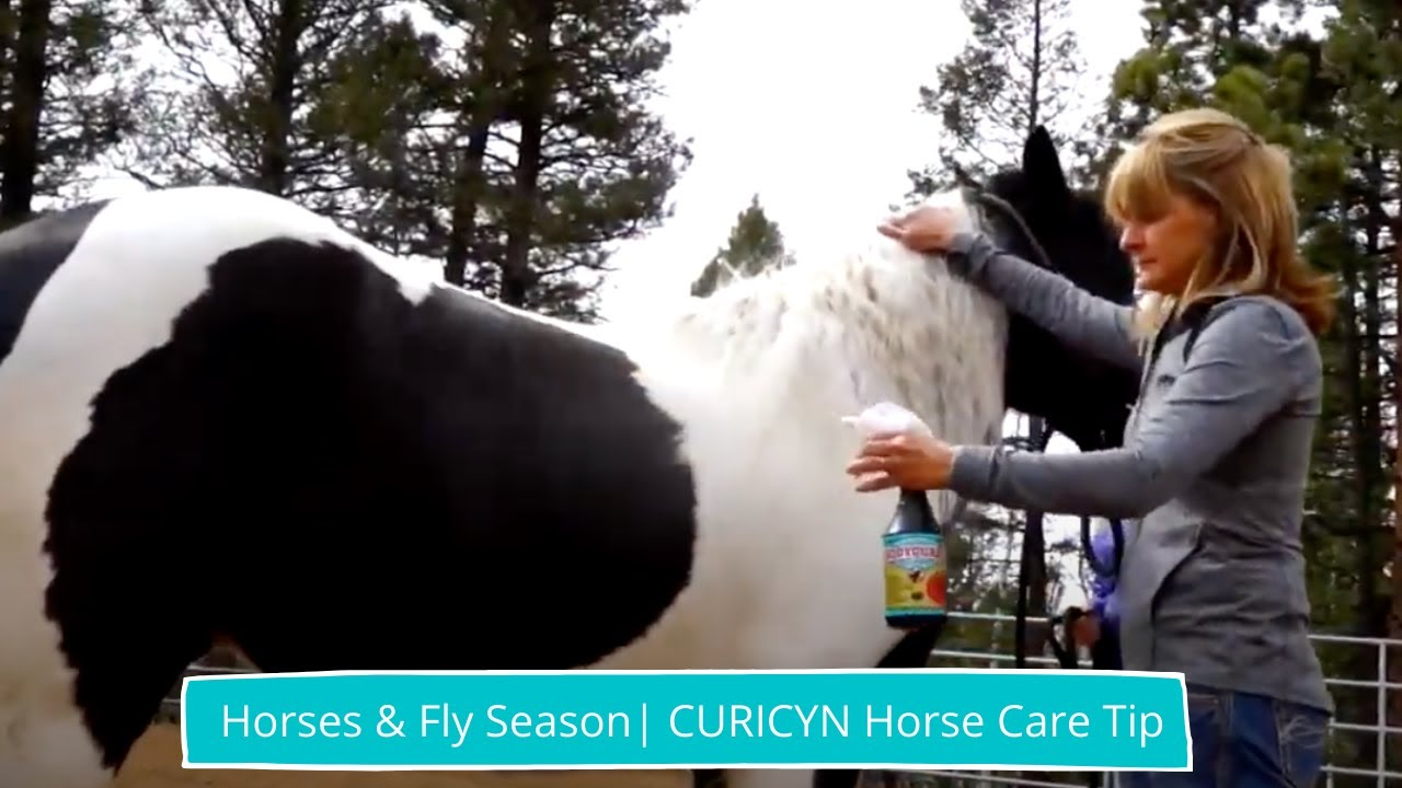 How to take care of a horse during fly season   CURICYN ...