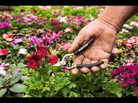 Jardineros profesionales URREA México