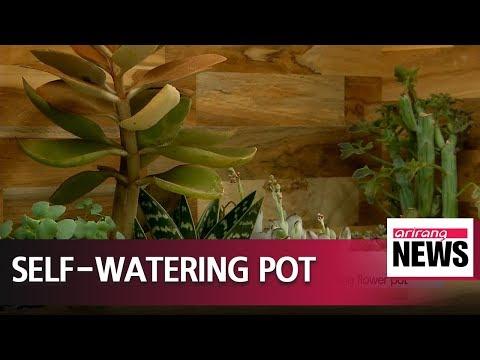 download Korean researchers develop self-watering flower pot