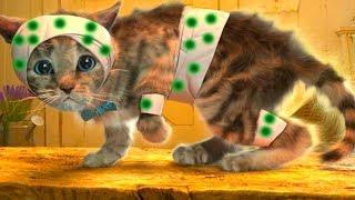 ПРИКЛЮЧЕНИЕ МАЛЕНЬКОГО КОТЕНКА мультик смешное видео для детей мультфильм про котиков