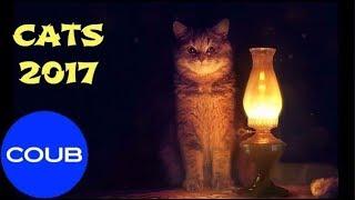 BEST COUB CATS#3, Лучшие котики Coub#3